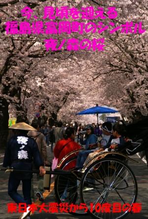 0福島夜の森桜1