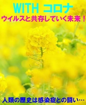 0菜の花1
