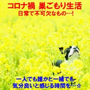 0菜の花畑犬1