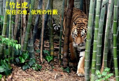 0-竹と虎1
