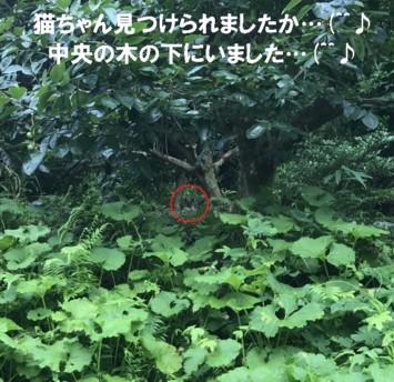 0-猫隠れa1