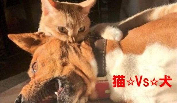 0-猫と犬1