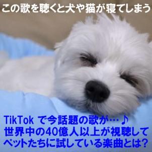 0-寝る犬1