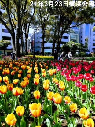 0-21-3-23横浜公園d1