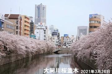 0-大岡川桜1