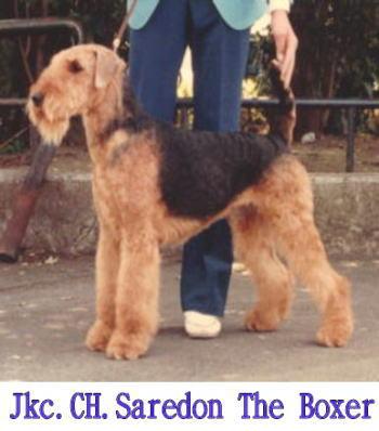 bsaredon the Boxer (1)