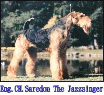 Saredon The Jazzsinger