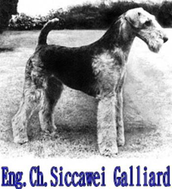 Siccawei Galliard2