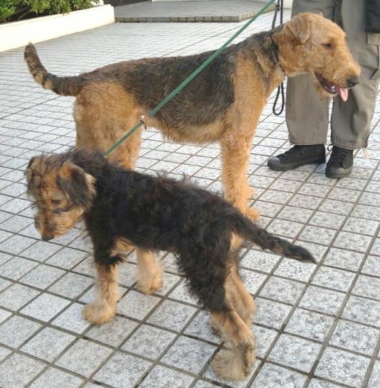 お母さんと散歩3