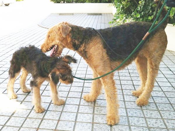 お母さんと散歩5