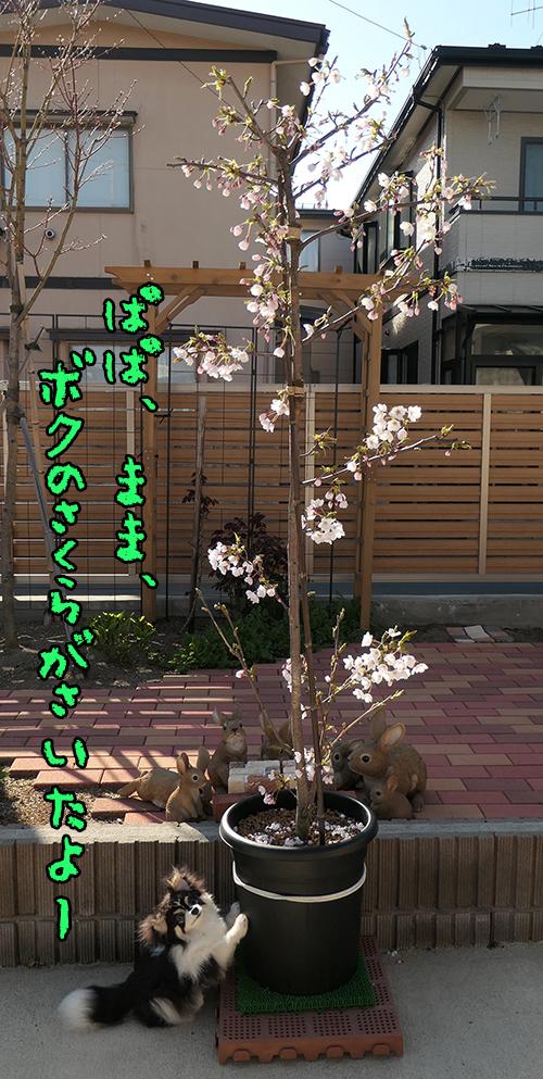 1_20200418023251fc5.jpg