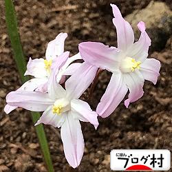 yukigeyuri 2