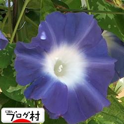 asagao02_20200812074300333.jpg