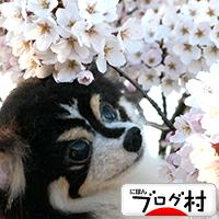 coosakura.jpg