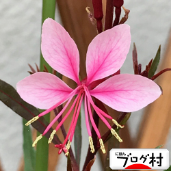 gaura_20201013070708ebd.jpg