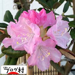 shakunage01_202005160752248e3.jpg