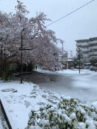 2020_3_29雪①