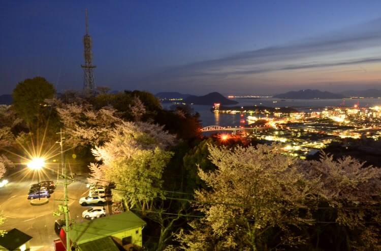 200406ogonyozakura003.jpg