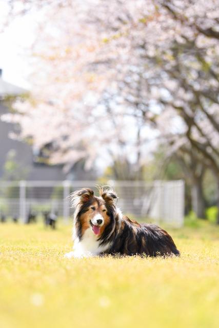 ナンタケットバスケット教室ドゥブリアン中村優子