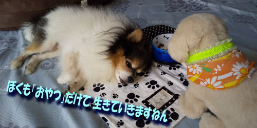 DSC_0063_20201002191707b67.jpg