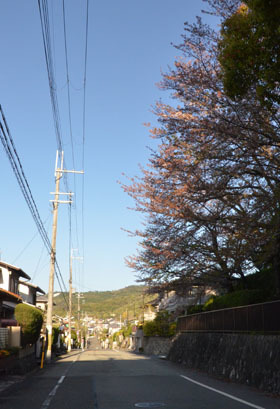 DSC_4322.jpg