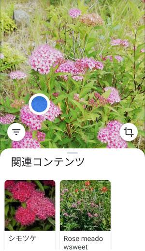 Screenshot_20200627_171405.jpg