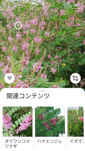 Screenshot_20200627_172045_x.jpg