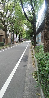 DSC_2782高宮通西鉄沿い道