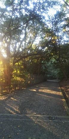 DSC_2791朝の散歩