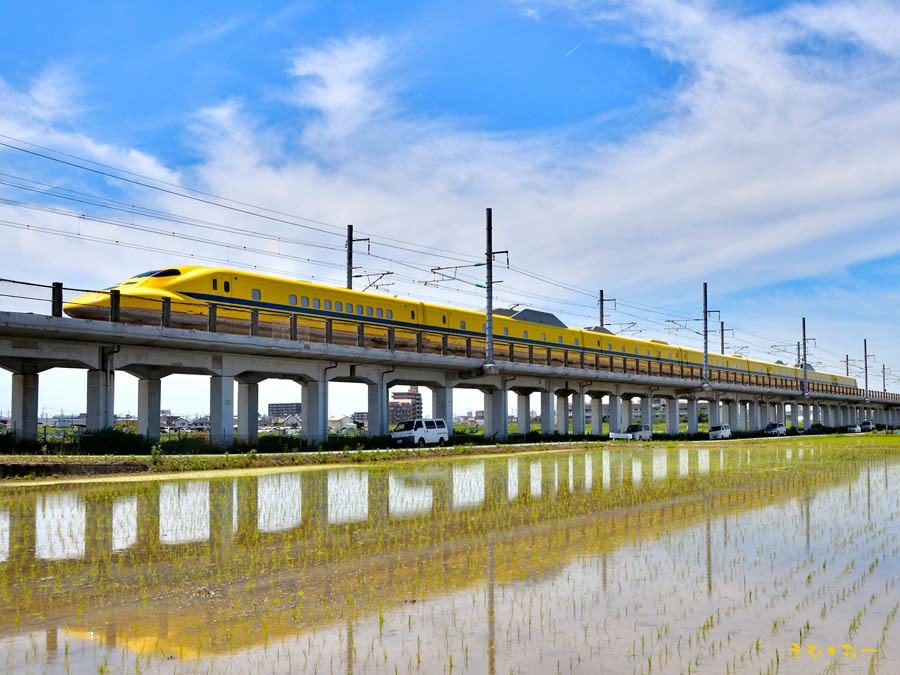 D Yellow-7b