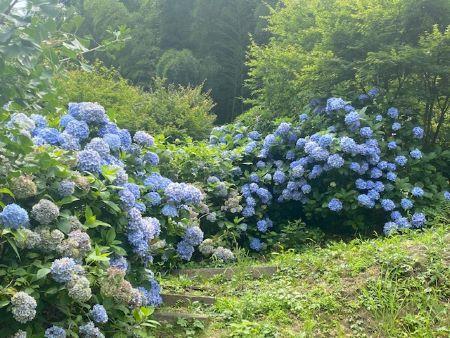 daitouhidamari2020711.jpg