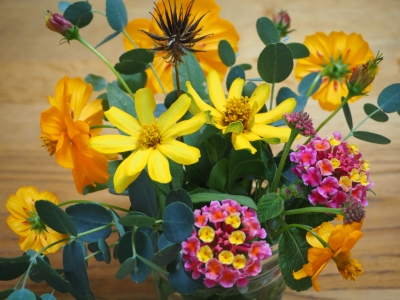 G_studiomimosa秋の切り花