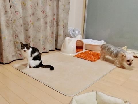201027-3jirosaya