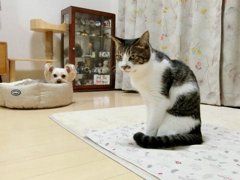201230-4sayajiro
