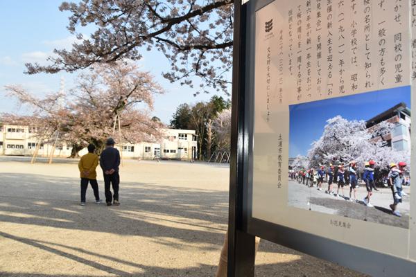 県指定天然記念物の案内板にもお花見集会の記述がある