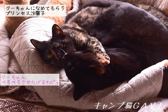 201112_7172.jpg