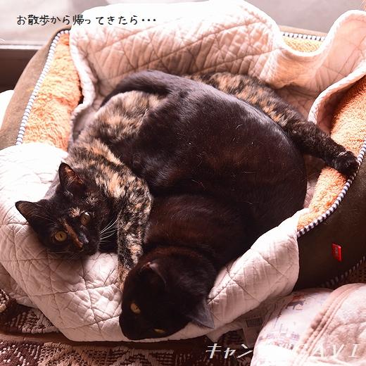 201112_7190.jpg