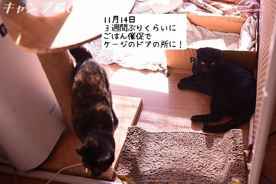 201114_7331a
