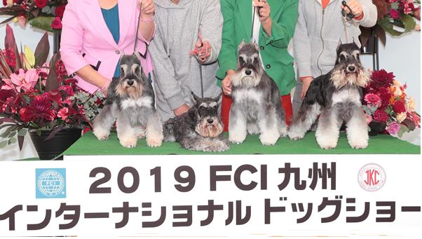 雅2019年長崎ショー