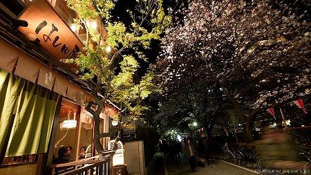 hanami1104_01.jpg