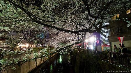 hanami1104_02.jpg