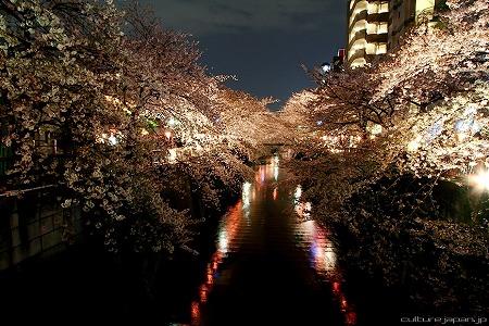 hanami1104_05.jpg