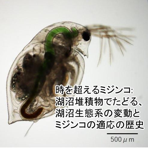 どこ博_時を超えるミジンコ_湖沼堆積物でたどる、湖沼生態系の変動とミジンコの適応の歴史1