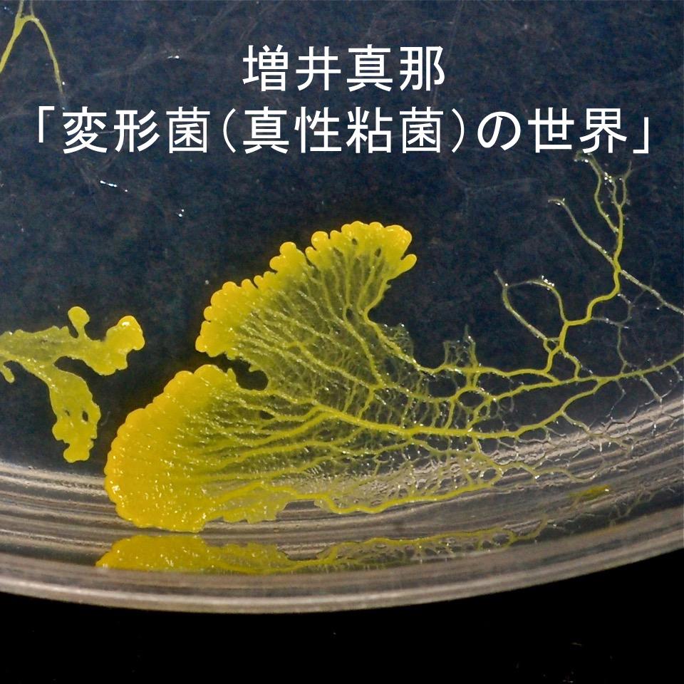 どこ博講演_増井真那「変形菌(真性粘菌)の世界」 _logo