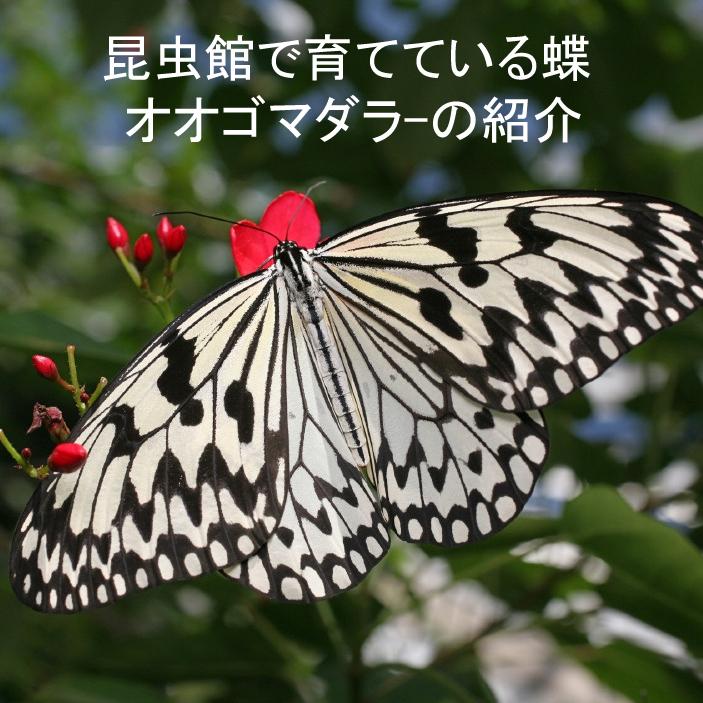 どこ博講演_2020ふれあい昆虫館_logo