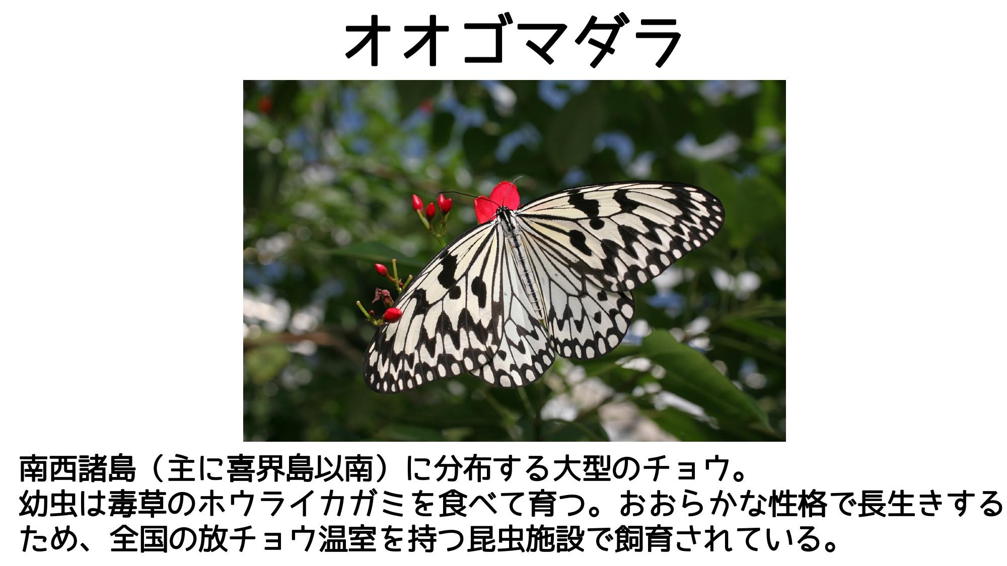 どこ博講演_2020ふれあい昆虫館 (1)