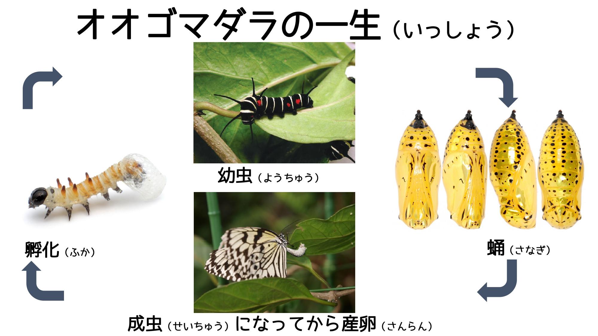 どこ博講演_2020ふれあい昆虫館 (2)