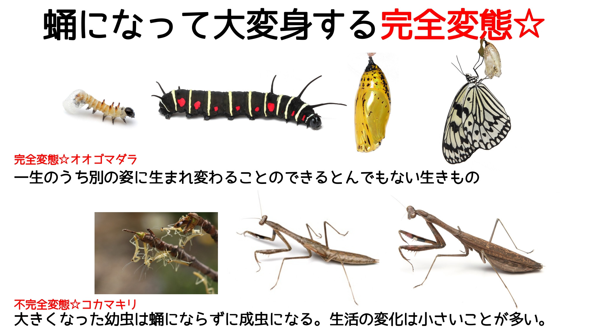 どこ博講演_2020ふれあい昆虫館 (4)