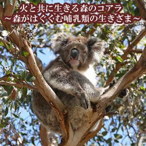 どこ博講演_火と共に生きる森のコアラ ~森がはぐくむ哺乳類の生きざま~_logo
