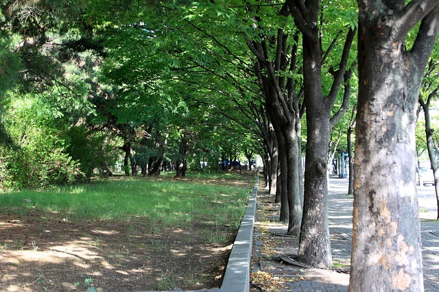 avenue-4654488_640.jpg